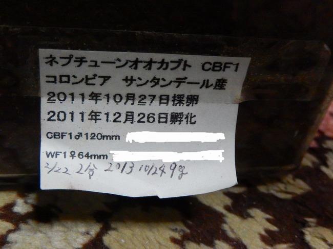 DSCN2873[1].jpg