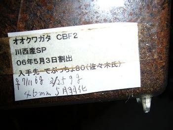 P1030899.jpg