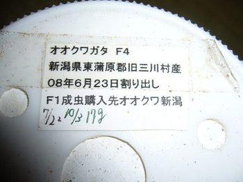 P1030990.jpg