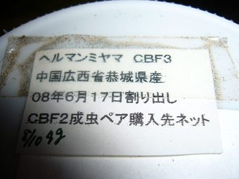 P1040105.jpg