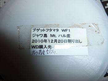 P1040131.jpg