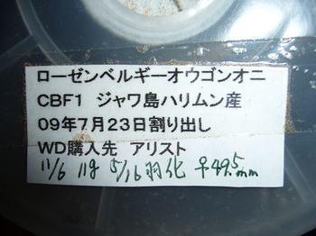 P1050480.jpg