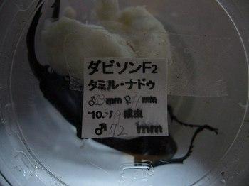 P1050499.jpg