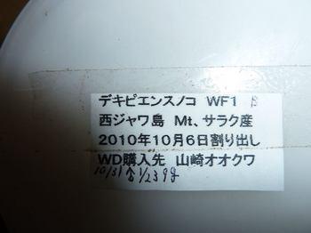 P1020279.jpg