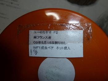 P1040489.jpg